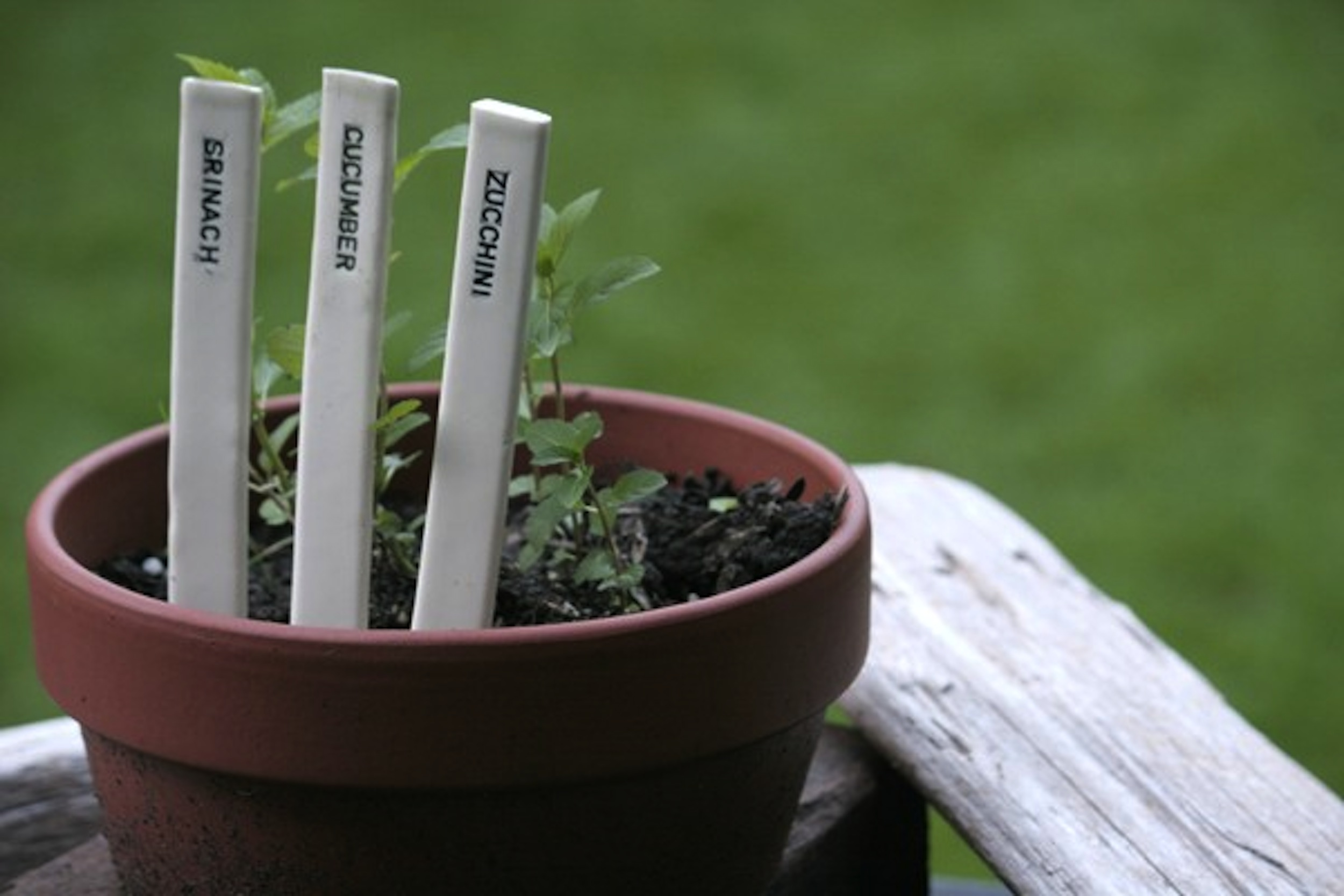Captivating Hand Crafted Ceramic Garden Markers